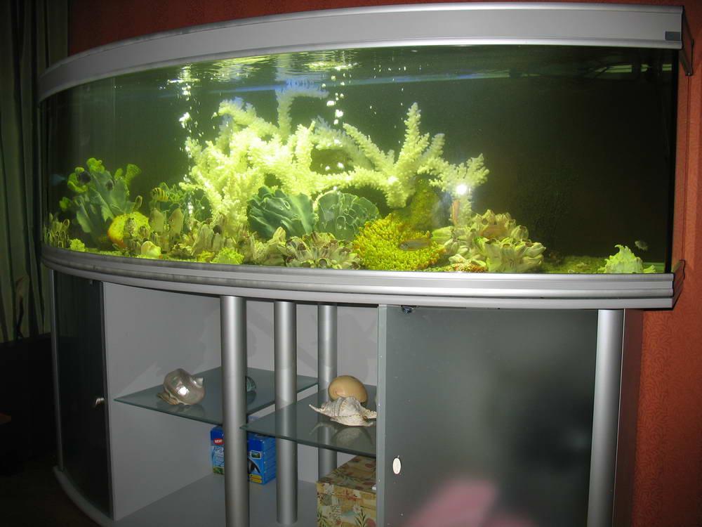 Оформление аквариумами