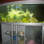 Оформление интерьера аквариумами