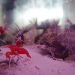 morskie-aqua-1