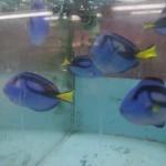 morskie-aqua-10