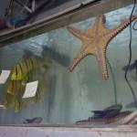 morskie-aqua-12