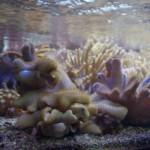 morskie-aqua-5