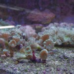 morskie-aqua-7