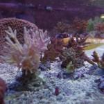 morskie-aqua-8